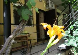 Студия Лили 1 - Однокомнатную квартиру – студию отдыха в Алуште.